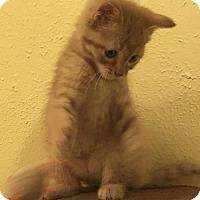 Adopt A Pet :: Beanz - Denver, CO