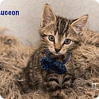 Adopt A Pet :: Luchon - San Juan Capistrano, CA