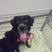 Adopt A Pet :: Serena - Gulfport, MS