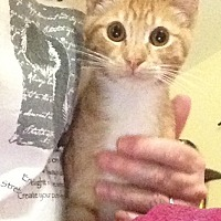 Adopt A Pet :: Jake - Eureka, CA