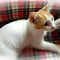 Adopt A Pet :: Jagger - Greensburg, PA