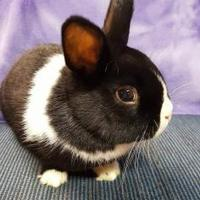 Adopt A Pet :: Xander - Kansas City, MO