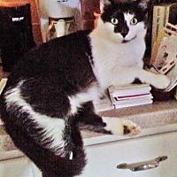 Adopt A Pet :: Sawyer - N. Billerica, MA