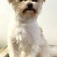 Adopt A Pet :: Prancer - Boulder, CO