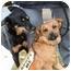 Photo 4 - Pug Mix Dog for adoption in Wayne, New Jersey - Mandy