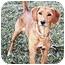 Photo 2 - Golden Retriever/Beagle Mix Dog for adoption in Owatonna, Minnesota - Luna