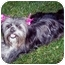 Photo 3 - Lhasa Apso Mix Dog for adoption in Los Angeles, California - MONKEE & REGIS
