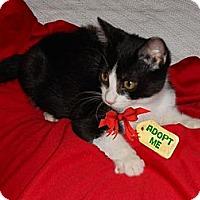 Adopt A Pet :: Lulu - Miami, FL