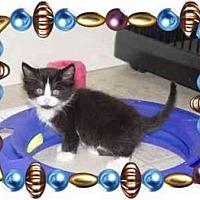 Adopt A Pet :: JUNE BUG - KANSAS, MO