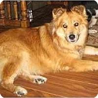 Adopt A Pet :: Sophie - courtesy posting - Scottsdale, AZ