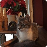 Adopt A Pet :: Grey - Douglas, ON