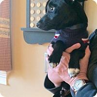 Adopt A Pet :: Baby Cole - Marlton, NJ