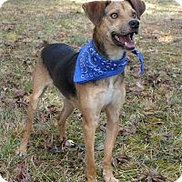 Adopt A Pet :: Benji - Mocksville, NC