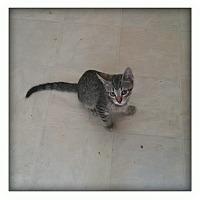 Adopt A Pet :: Lummis - london, ON