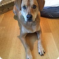 Adopt A Pet :: Dusty - Raritan, NJ