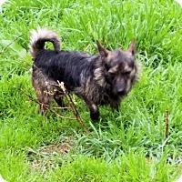 Adopt A Pet :: Burt - Rock Hill, SC