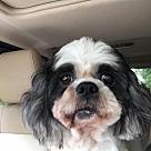 Adopt A Pet :: Gizmo Boy