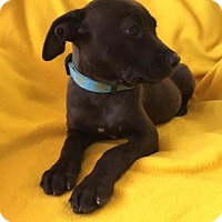 Adopt A Pet :: Turtle - DeSoto, IA