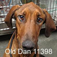 Adopt A Pet :: Old Dan - Manassas, VA
