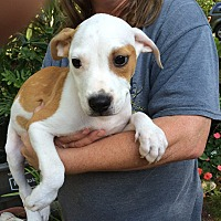 Adopt A Pet :: Marshal - Olive Branch, MS