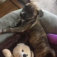 Adopt A Pet :: Michael Curr - Tampa, FL