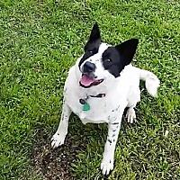 Adopt A Pet :: Gypsy - Wichita Falls, TX
