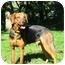 Photo 2 - Hound (Unknown Type)/German Shepherd Dog Mix Dog for adoption in Jacksonville, Florida - Meg