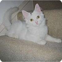 Adopt A Pet :: Sugar Bear - Cincinnati, OH