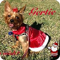 Adopt A Pet :: Gertie - Clearwater, FL