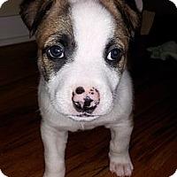 Adopt A Pet :: Sleepy - Chicago, IL