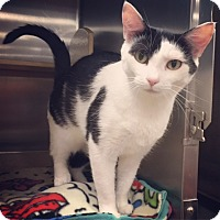 Adopt A Pet :: Shelby - Raleigh, NC
