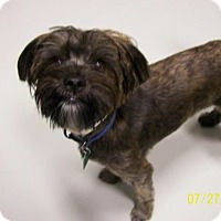 Adopt A Pet :: Teddy - Brewster, NY