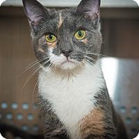 Adopt A Pet :: Daisy - New York, NY