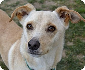 Terrier (Unknown Type, Small) Mix Dog for adoption in Meridian, Idaho - Buck