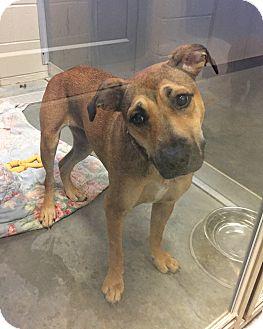 Shepherd (Unknown Type) Mix Dog for adoption in Wilmington, Delaware - Bertie