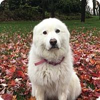 Adopt A Pet :: Xena warrior Princess - Kyle, TX