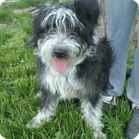 Adopt A Pet :: Rascal *Pending* - Logan, UT