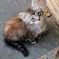 Adopt A Pet :: Paisley - Texarkana, AR