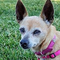 Adopt A Pet :: Dolly - Oakley, CA