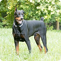 Adopt A Pet :: JUNIUS - Greensboro, NC
