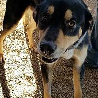 Adopt A Pet :: Bandit - Las Vegas, NV