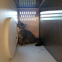 Adopt A Pet :: Beckie - Indianapolis, IN