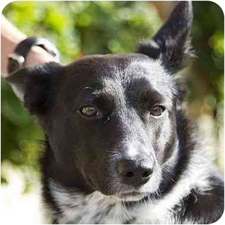 Border Collie Mix Dog for adoption in Berkeley, California - Lupine