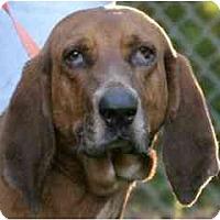 Adopt A Pet :: Reuben - Albany, NY