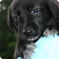 Adopt A Pet :: July - Foster, RI