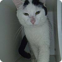 Adopt A Pet :: Arie - Hamburg, NY