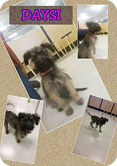 Terrier (Unknown Type, Medium) Mix Puppy for adoption in LAKEWOOD, California - Dasiy