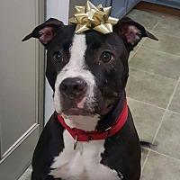 Adopt A Pet :: Cash - Williamsburg, VA