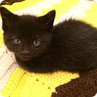 Adopt A Pet :: Bellatrix - River Edge, NJ