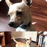 Adopt A Pet :: Hurcules - Tucson, AZ